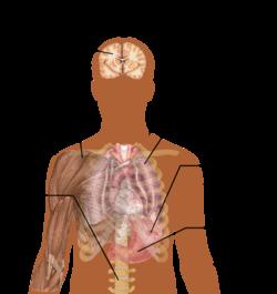 Mаlаriа: Symptoms, Diagnosis and Prevention