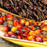 AMAZING BENEFITS OF PALM OIL