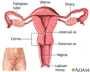 What you should know about Fibroids