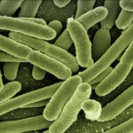A Fascinating Connection Between Gut Health and Cancer Treatment